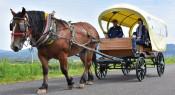 馬車で史跡巡るツアーいかが 奥州で滞在型旅行