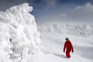 美しき「怪物」冬の主役