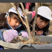 貴重なチョウ、卵ここにも 亀岳小が保護活動